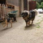 Der große Big Ben und die kleine Zoe